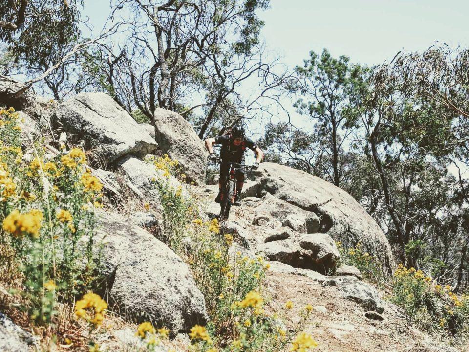 05 Werpil flora downhill